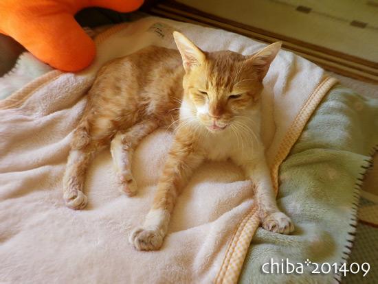 chiba14-09-116.jpg