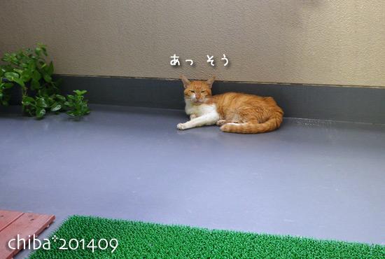 chiba14-09-11x.jpg