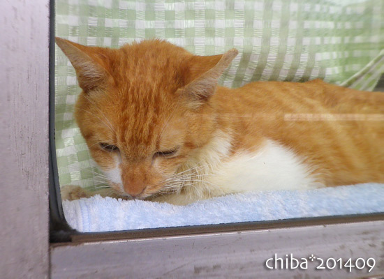 chiba14-09-14.jpg
