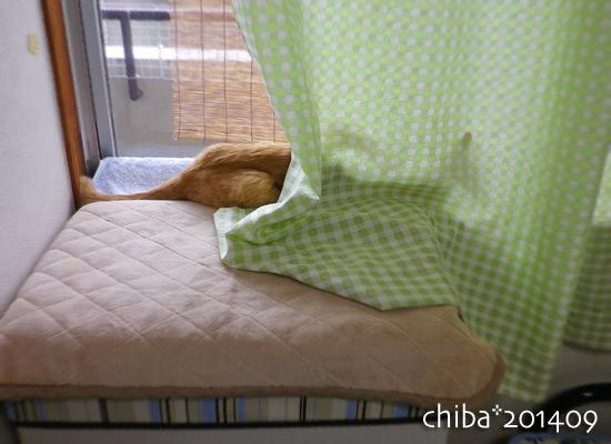 chiba14-09-15.jpg