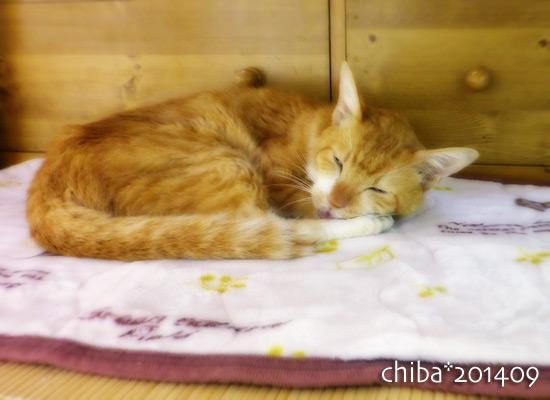 chiba14-09-22x.jpg