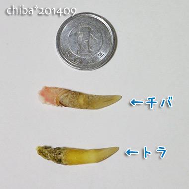 chiba14-09-26.jpg