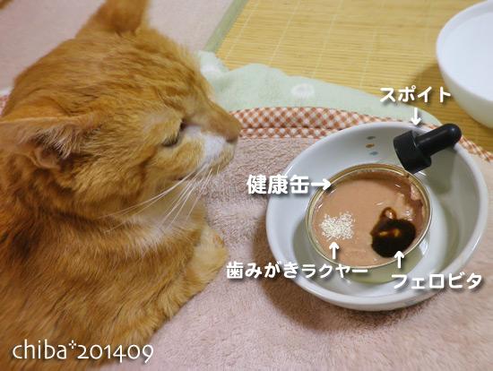 chiba14-09-29.jpg