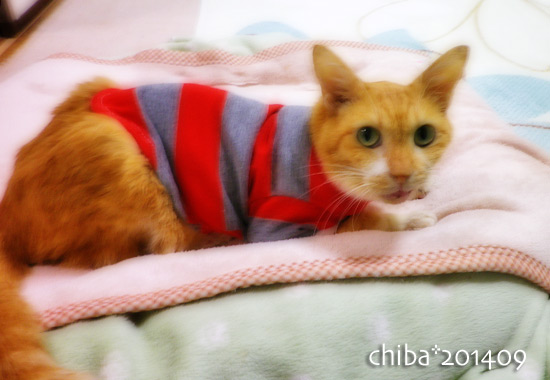 chiba14-09-62.jpg