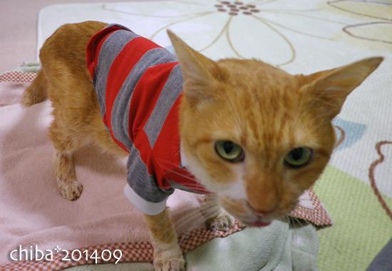 chiba14-09-65.jpg