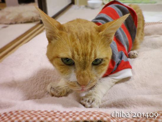 chiba14-09-67.jpg