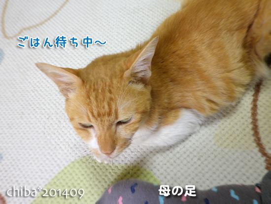 chiba14-09-95.jpg