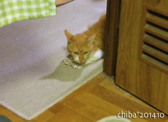 chiba14-10-02.jpg