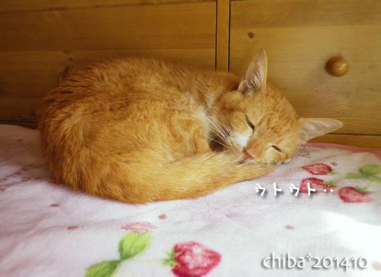 chiba14-10-05.jpg