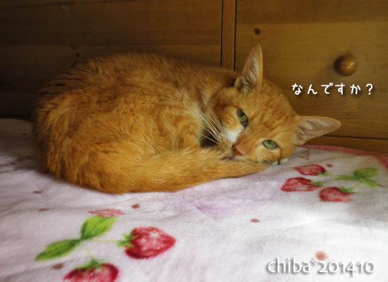 chiba14-10-06.jpg