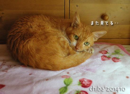 chiba14-10-07.jpg
