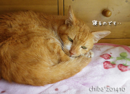 chiba14-10-09.jpg