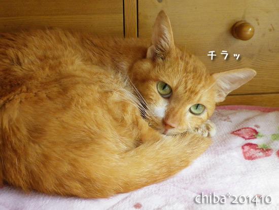 chiba14-10-10.jpg