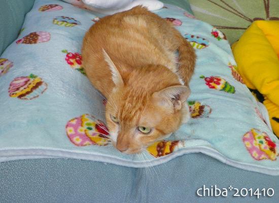chiba14-10-103.jpg