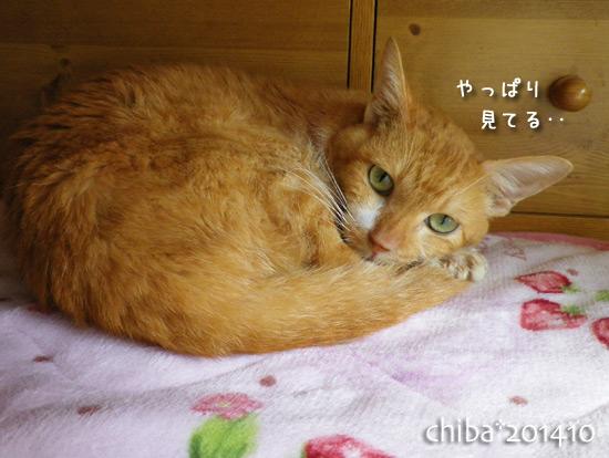 chiba14-10-11.jpg