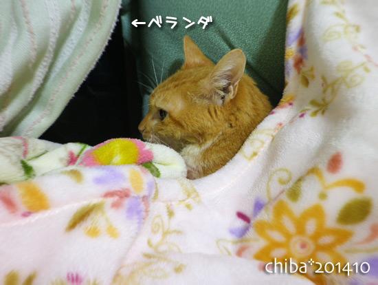 chiba14-10-118.jpg