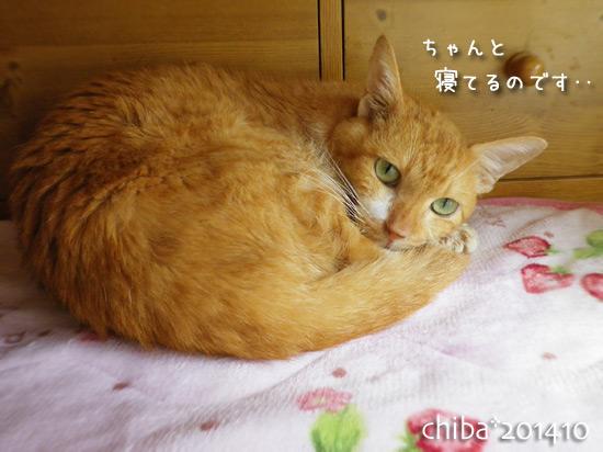chiba14-10-13.jpg
