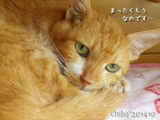 chiba14-10-14.jpg