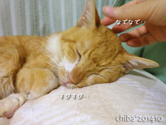 chiba14-10-23.jpg