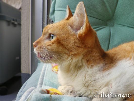 chiba14-10-99.jpg