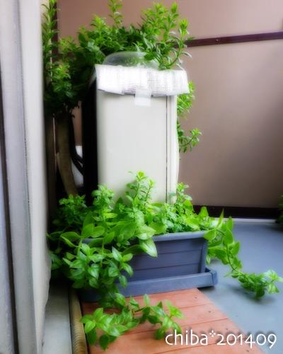 green14-09-01.jpg