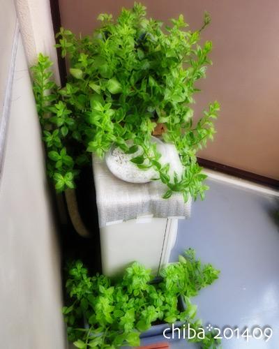green14-09-02.jpg