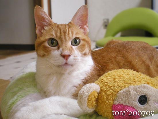 tora14-09-04.jpg