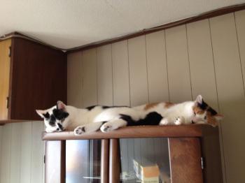 長い猫団子