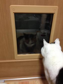 ねこでもドア