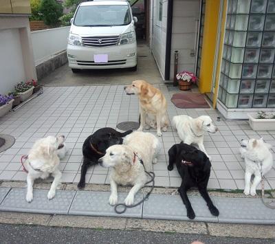 動物福祉ボランティア協会