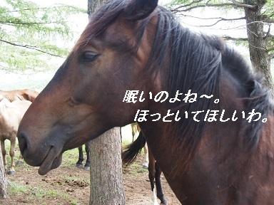 P8031388.jpg