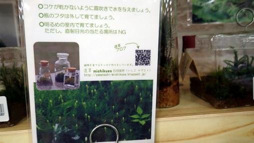 サカタの種2014-08-15 (11)