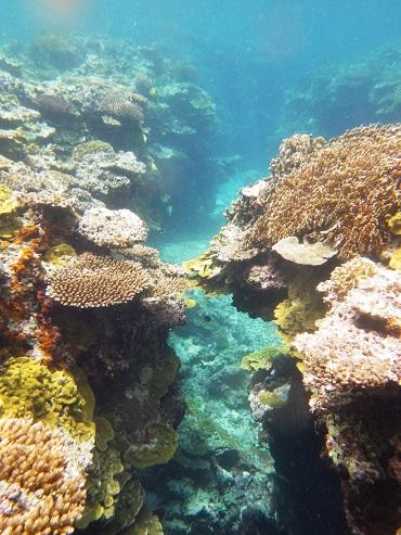 写真5_珊瑚