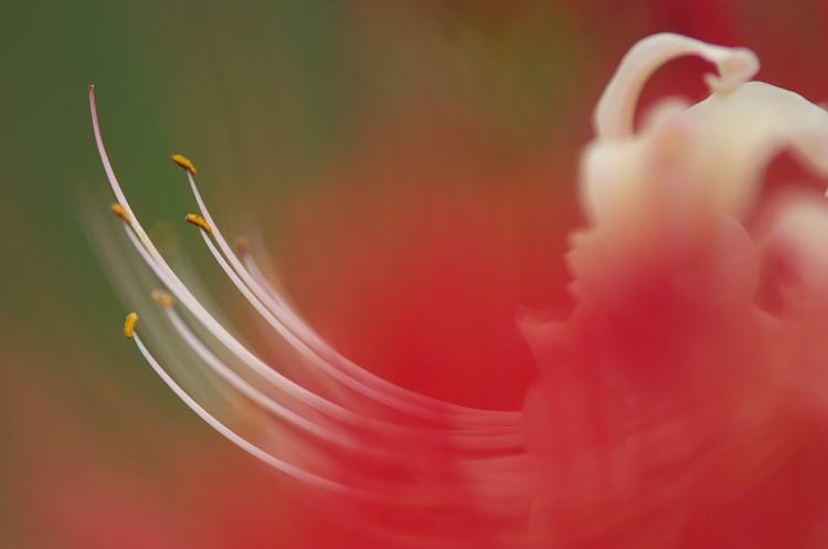 彼岸花が咲く季節