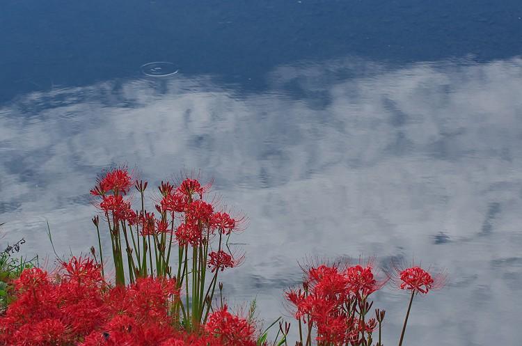 彼岸花が咲く季節 3