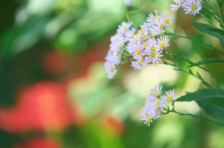 彼岸花が咲く季節 7