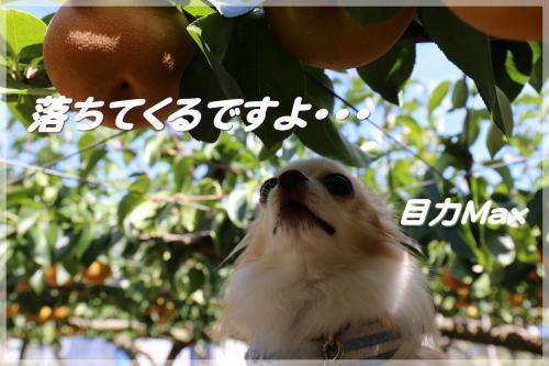 IMG_8864_convert_20140914222721.jpg
