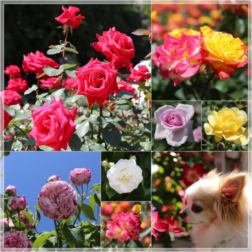 page_convert_20140531135546.jpg