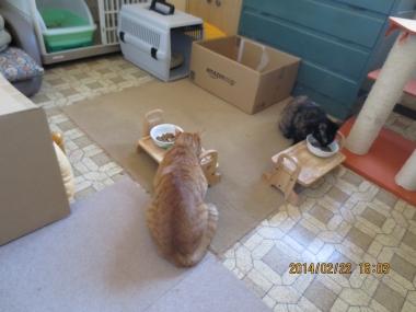 2014.02.22-5-yuka & yuki