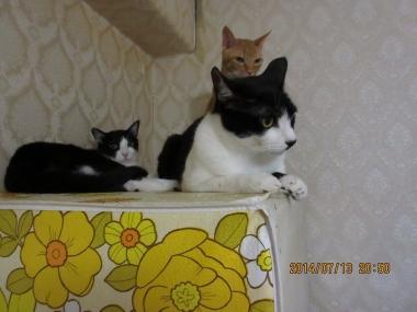 2014.07.13-B-14 mao, nao & yuki