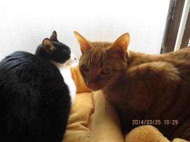 2014.03.25-11 nao & yuki