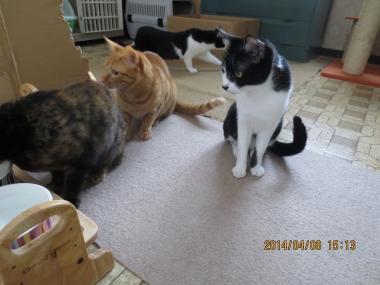 2014.04.06-1 mao & ochibi trio