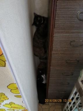 2014.04.29-5 yuka, Mao & yuki