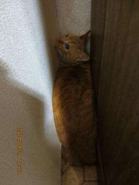 2014.04.29-11 yuki