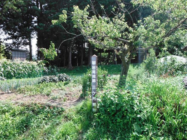 岩尾城② (8)
