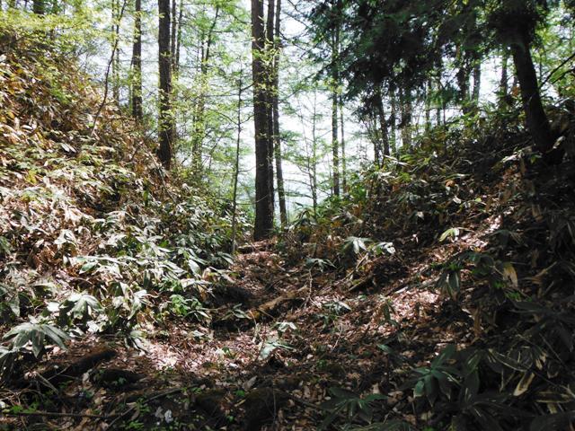 鴨ヶ岳城・鎌ヶ岳城(中野市) (152)
