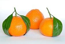 250px-Mandarin_Oranges_(Citrus_Reticulata).jpg