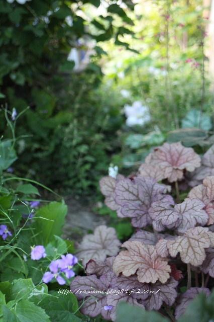 西側通路日蔭花壇