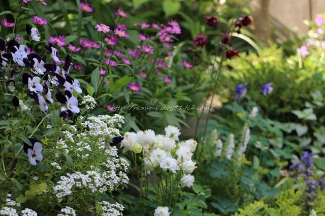 南日蔭花壇