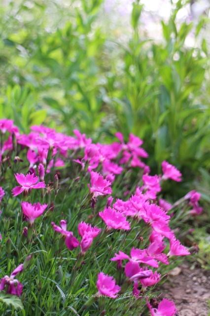 南側半日蔭花壇